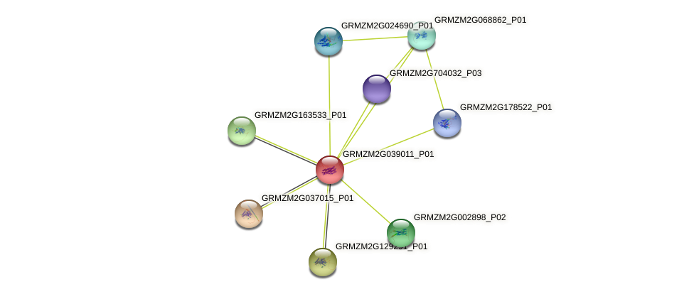 GRMZM2G039011_P01 protein (Zea mays) - STRING interaction network