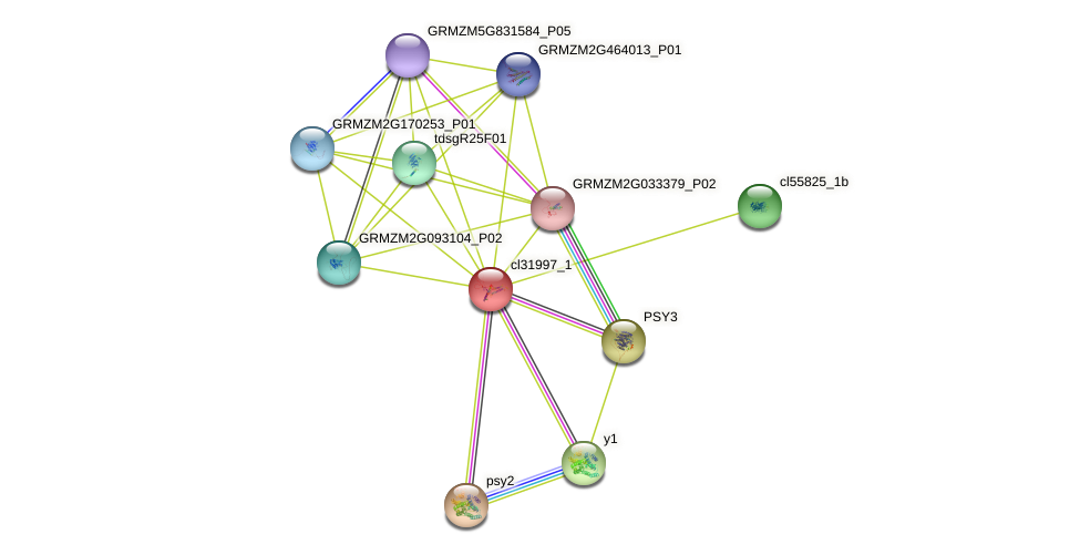 cl31997_1 protein (Zea mays) - STRING interaction network