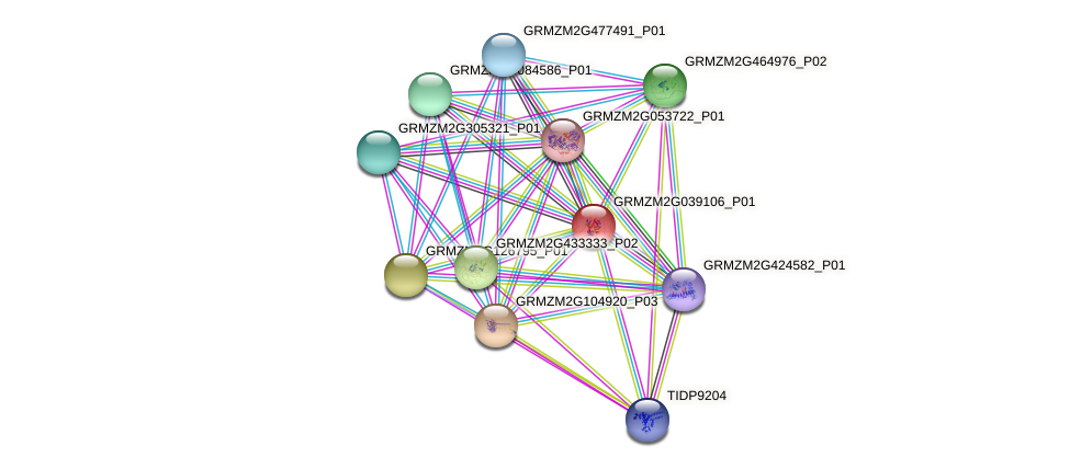 GRMZM2G039106_P01 protein (Zea mays) - STRING interaction network