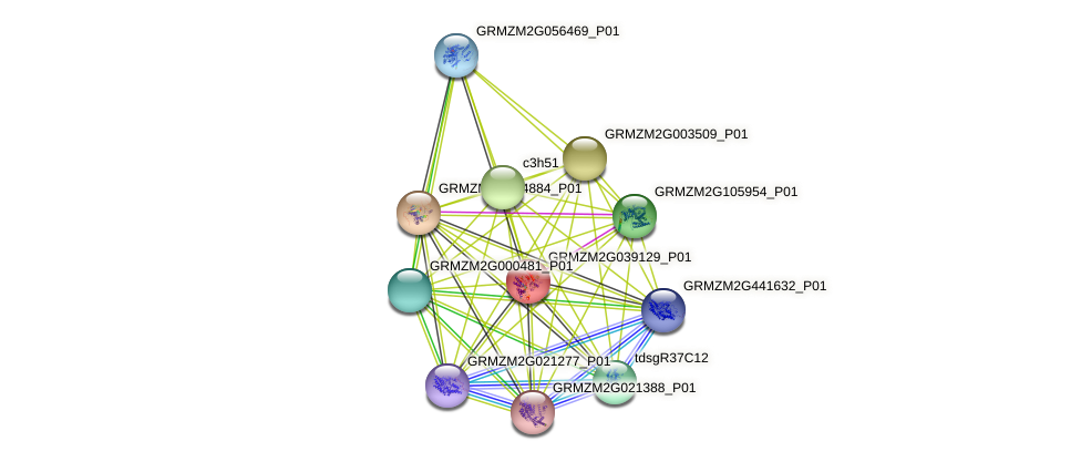 GRMZM2G039129_P01 protein (Zea mays) - STRING interaction network