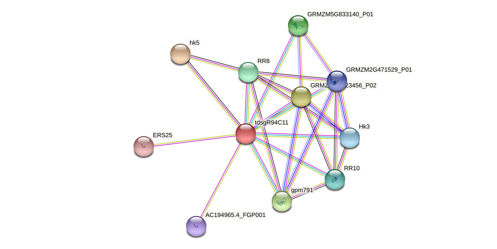GRMZM2G039246_P01 protein (Zea mays) - STRING interaction network