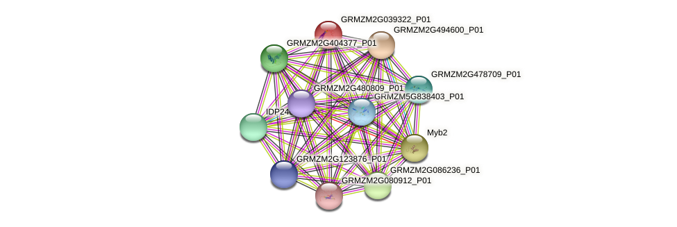 GRMZM2G039322_P01 protein (Zea mays) - STRING interaction network