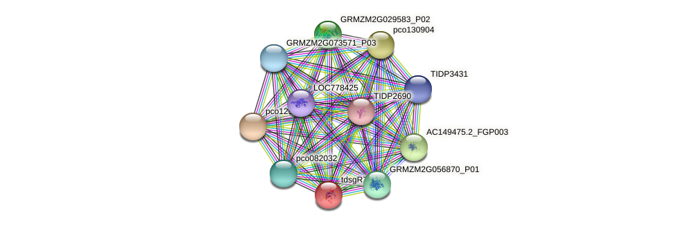 Zm.160645 protein (Zea mays) - STRING interaction network
