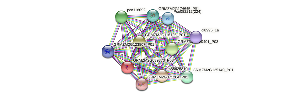GRMZM2G039373_P01 protein (Zea mays) - STRING interaction network