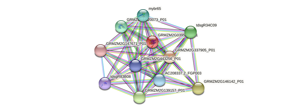 GRMZM2G039520_P01 protein (Zea mays) - STRING interaction network