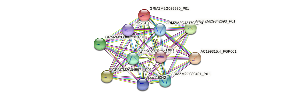 Zm.1776 protein (Zea mays) - STRING interaction network