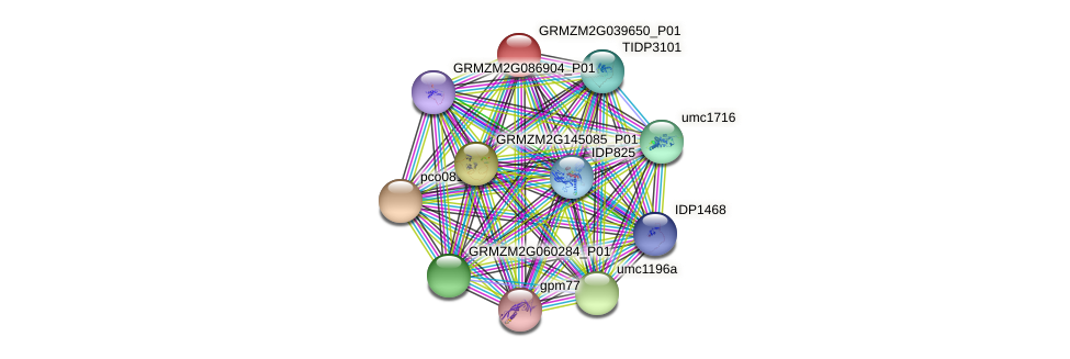 GRMZM2G039650_P01 protein (Zea mays) - STRING interaction network