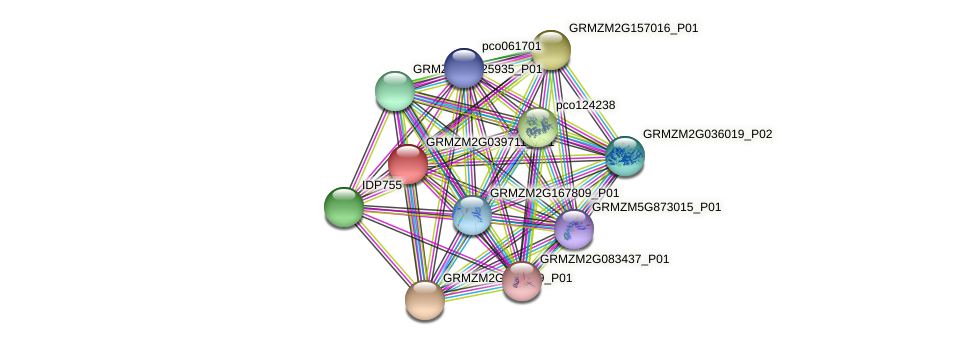 GRMZM2G039711_P01 protein (Zea mays) - STRING interaction network