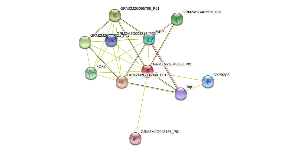 GRMZM2G040033_P01 protein (Zea mays) - STRING interaction network