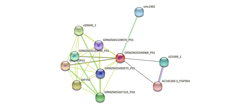GRMZM2G040068_P01 protein (Zea mays) - STRING interaction network