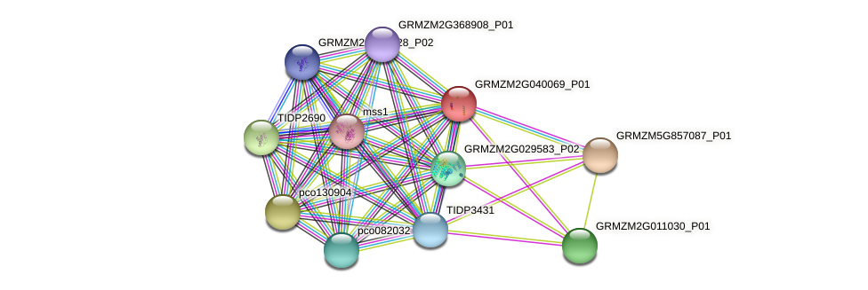 GRMZM2G040069_P01 protein (Zea mays) - STRING interaction network