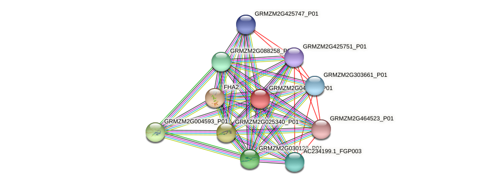 GRMZM2G040078_P01 protein (Zea mays) - STRING interaction network
