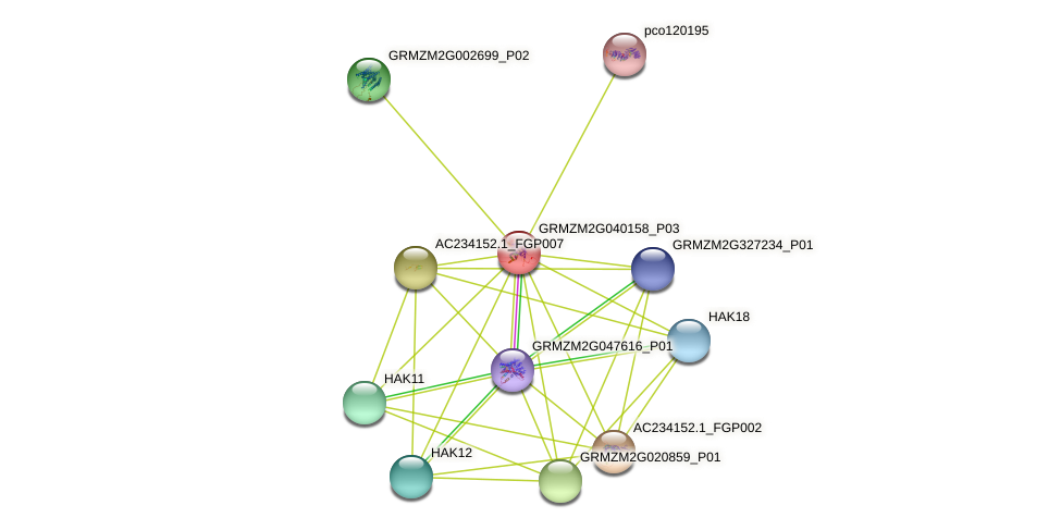 GRMZM2G040158_P03 protein (Zea mays) - STRING interaction network
