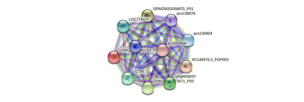 GRMZM2G040164_P01 protein (Zea mays) - STRING interaction network