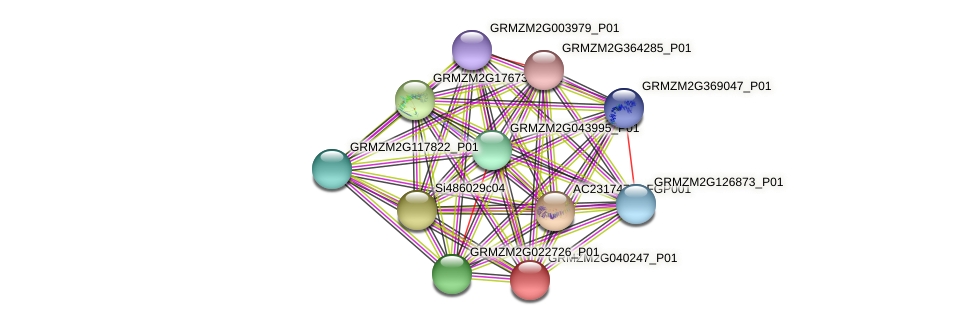 GRMZM2G040247_P01 protein (Zea mays) - STRING interaction network