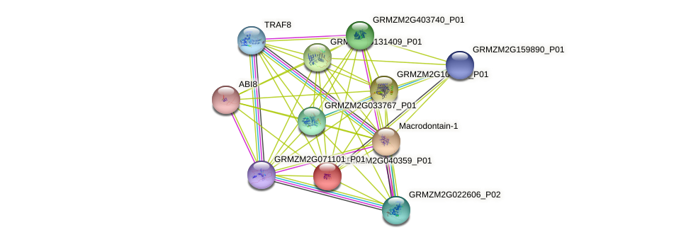 GRMZM2G040359_P01 protein (Zea mays) - STRING interaction network
