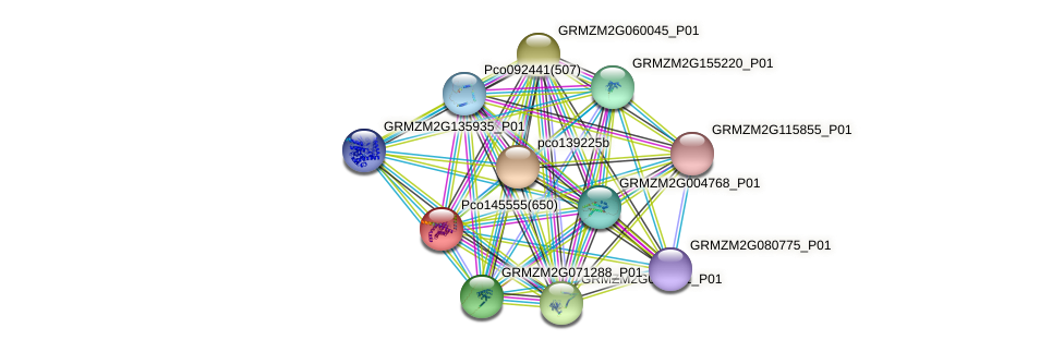 GRMZM2G040424_P01 protein (Zea mays) - STRING interaction network