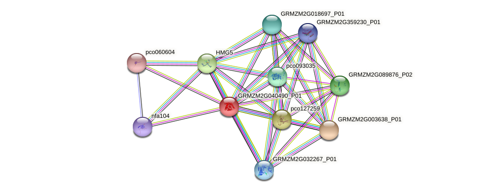 GRMZM2G040490_P01 protein (Zea mays) - STRING interaction network