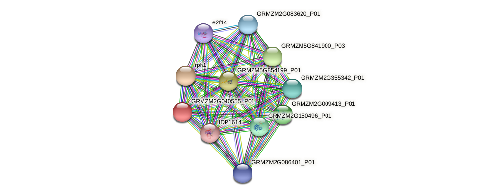 GRMZM2G040555_P01 protein (Zea mays) - STRING interaction network