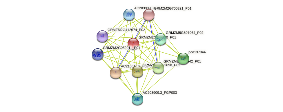 GRMZM2G040750_P01 protein (Zea mays) - STRING interaction network