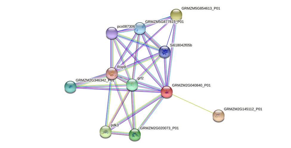 GRMZM2G040840_P01 protein (Zea mays) - STRING interaction network