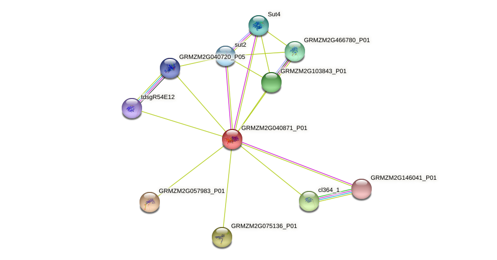 GRMZM2G040871_P01 protein (Zea mays) - STRING interaction network