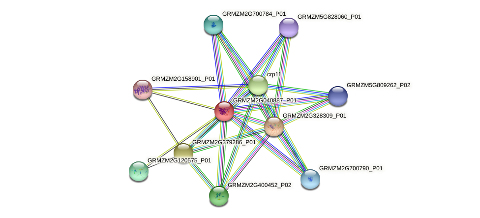 GRMZM2G040887_P01 protein (Zea mays) - STRING interaction network