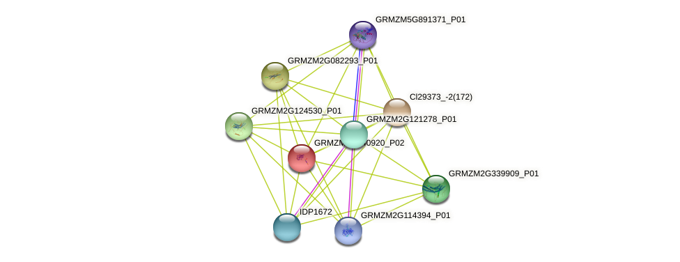 Zm.12337 protein (Zea mays) - STRING interaction network