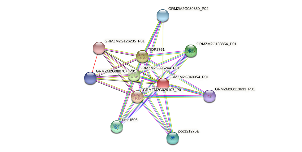GRMZM2G040954_P01 protein (Zea mays) - STRING interaction network