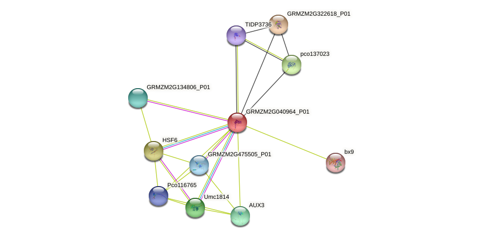 GRMZM2G040964_P01 protein (Zea mays) - STRING interaction network