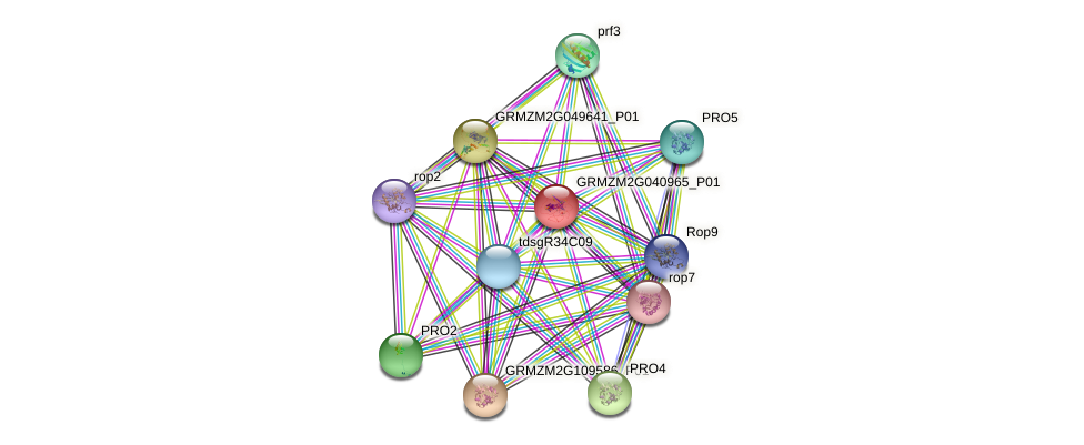 GRMZM2G040965_P01 protein (Zea mays) - STRING interaction network