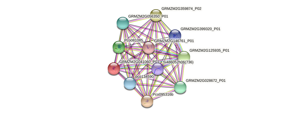 GRMZM2G041060_P01 protein (Zea mays) - STRING interaction network