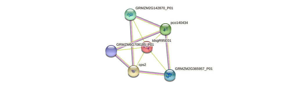 GRMZM2G041247_P01 protein (Zea mays) - STRING interaction network