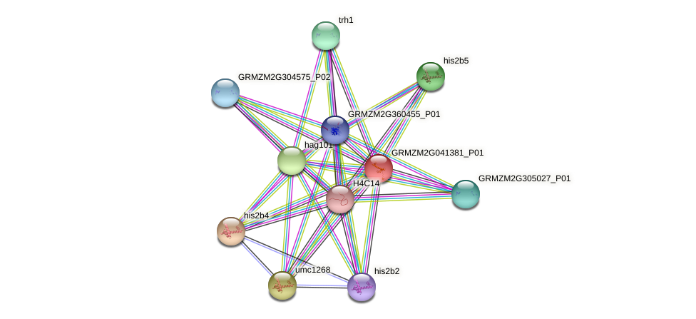 GRMZM2G041381_P01 protein (Zea mays) - STRING interaction network
