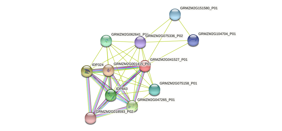 GRMZM2G041527_P01 protein (Zea mays) - STRING interaction network