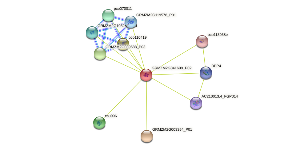 GRMZM2G041699_P02 protein (Zea mays) - STRING interaction network