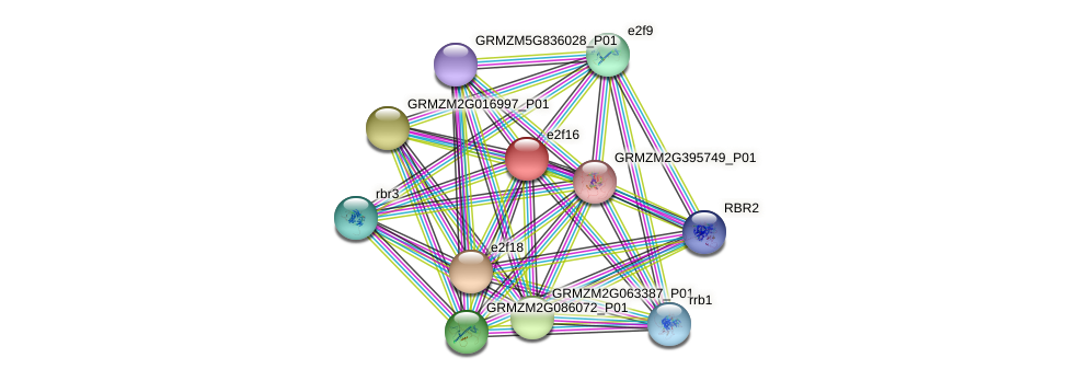 e2f16 protein (Zea mays) - STRING interaction network