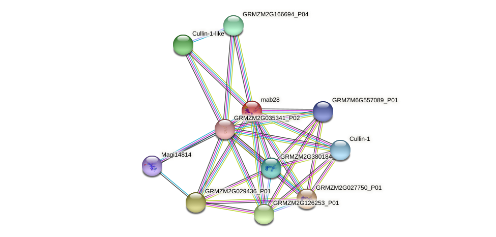 GRMZM2G041963_P01 protein (Zea mays) - STRING interaction network