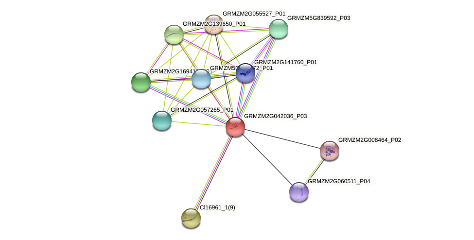 TIDP3287 protein (Zea mays) - STRING interaction network