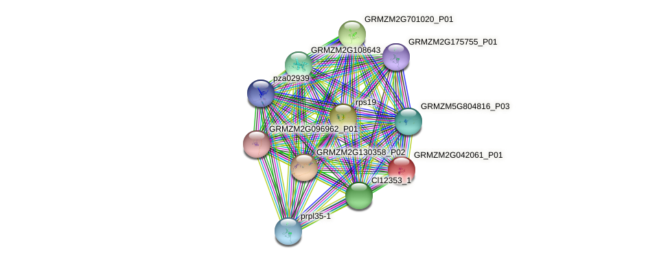GRMZM2G042061_P01 protein (Zea mays) - STRING interaction network