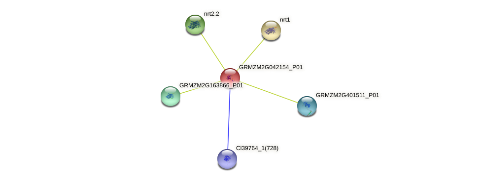 GRMZM2G042154_P01 protein (Zea mays) - STRING interaction network
