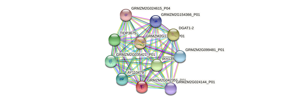 GRMZM2G042356_P01 protein (Zea mays) - STRING interaction network