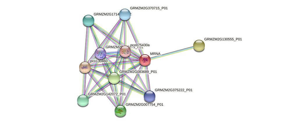 GRMZM2G042398_P01 protein (Zea mays) - STRING interaction network