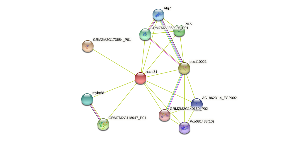 nac81 protein (Zea mays) - STRING interaction network