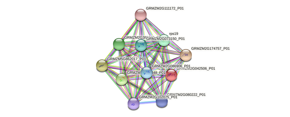 GRMZM2G042506_P01 protein (Zea mays) - STRING interaction network