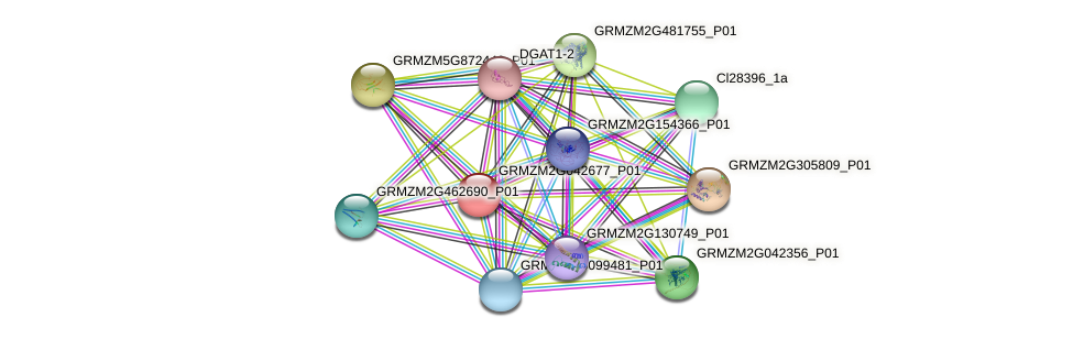 GRMZM2G042677_P01 protein (Zea mays) - STRING interaction network