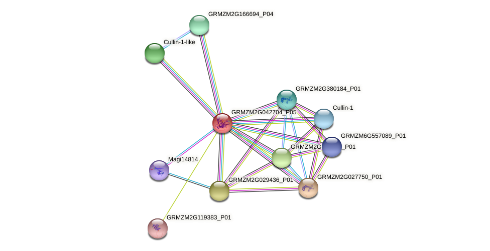 GRMZM2G042704_P05 protein (Zea mays) - STRING interaction network