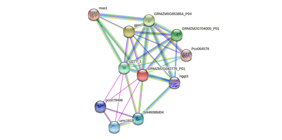 GRMZM2G042776_P01 protein (Zea mays) - STRING interaction network