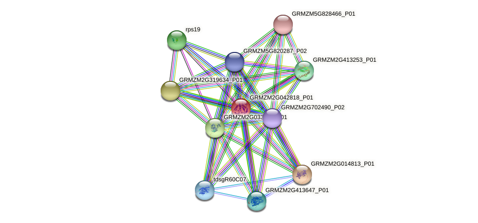 GRMZM2G042818_P01 protein (Zea mays) - STRING interaction network