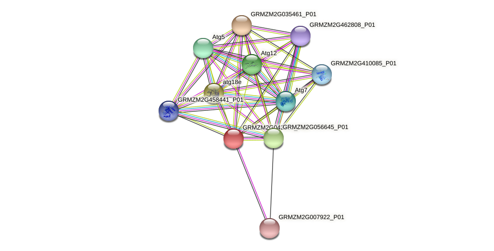 Zm.160324 protein (Zea mays) - STRING interaction network